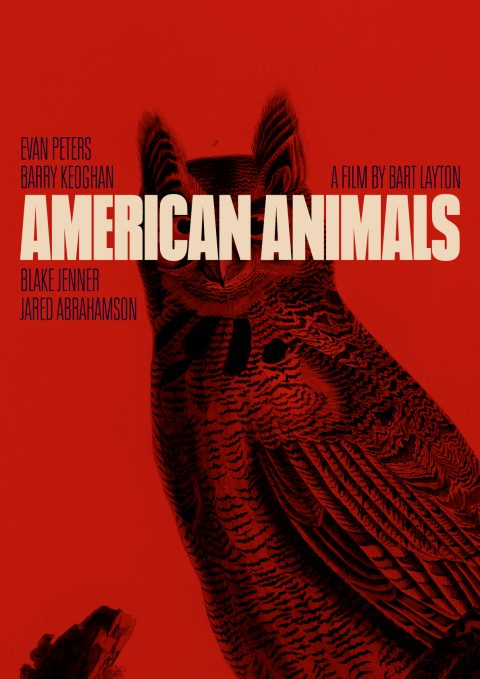 American Animals, An Owls Stare