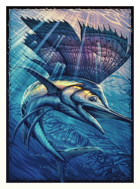 Pacific Sailfish vector poster